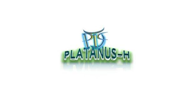 platanus store
